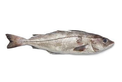 Schellfisch Fischlexikon / Blog