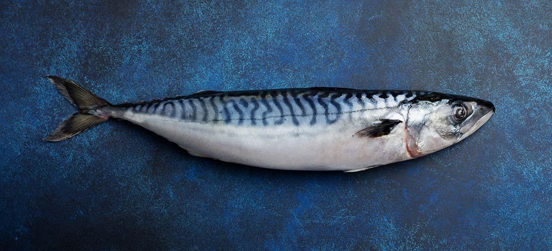 Makrele Produkte