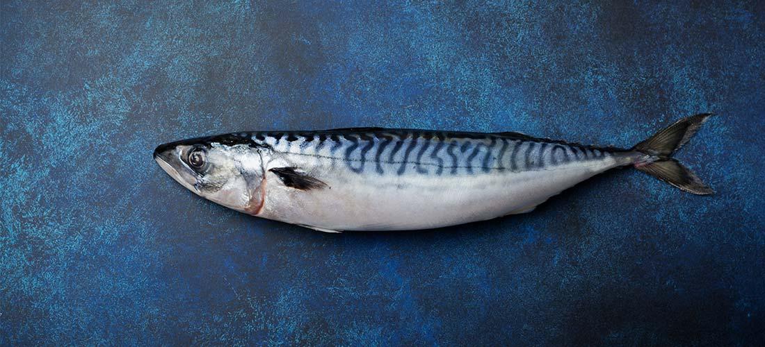 Lobsterking Fisch Sortiment